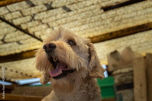 Tela  Un adorable perro sonriendo y mirando hacia afuera