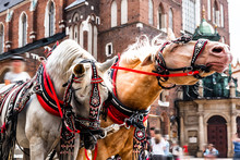 Traditional Horse-drawn Cart On The Main Square Of The Historic City.Beautiful Horses In The Town Center.Carriage For Tourists On The Background Of A Historic Church.Cracow, Poland.