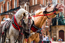 View Of Cracow, Poland.Beautiful Horses In The Town Center. Traditional Carriage For Tourists On The Background Of A Historic Church.Horse-drawn Cart On The Main Square Of The Historic City.