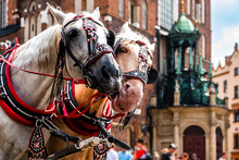 Wonderful Horses In The Town Center. Carriage For Tourists On The Background Of A Historic Church.Horse-drawn Cart On The Main Square Of The Historic City. Cracow, Poland.Tourists.