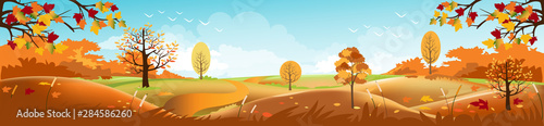 Foto auf Leinwand Pool Panoramic of Countryside landscape in autumn, Vector illustration of horizontal banner of autumn landscape mountains and maple trees fallen with yellow foliage.