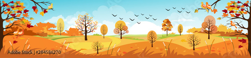 Fényképezés Panoramic of Countryside landscape in autumn, Vector illustration of horizontal banner of autumn landscape mountains and maple trees fallen with yellow foliage