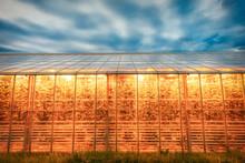 Amazing Geothermal Heated Greenhouse For Tomatoes Shining At Dusk On Iceland