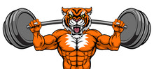 A Tiger Animal Body Builder Sports Mascot Weight Lifting A Barbell