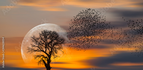 Foto auf Gartenposter Baume Silhouette of birds with lone tree in the background big full moon at amazing sunset