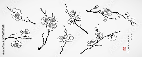 Watercolor ink paint art vector texture illustration cherry blossom flower branch collection Fototapeta