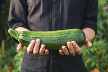 Organic Vegetables. Healthy Food. Fresh Organic Squash Or Zucchini In Farmers Hands