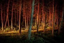 Magical Lights Sparkling In Mysterious Forest At Night. Pine Forest With Strange Light