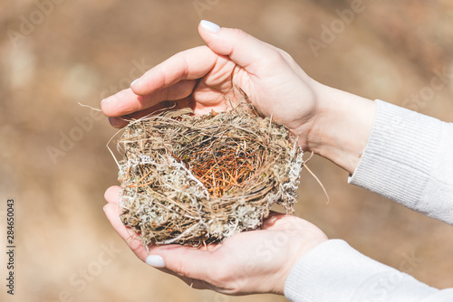 Sturdy nest made by birds from grass, branches and pine needles in female hands in the forest Canvas-taulu
