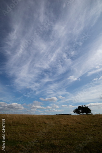 Silhouetted windswept stunted tree on farm grassland field in rural Hampshire ag Fototapet