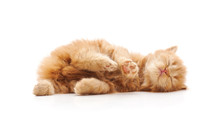 Cute Kitten Lies On His Back A...