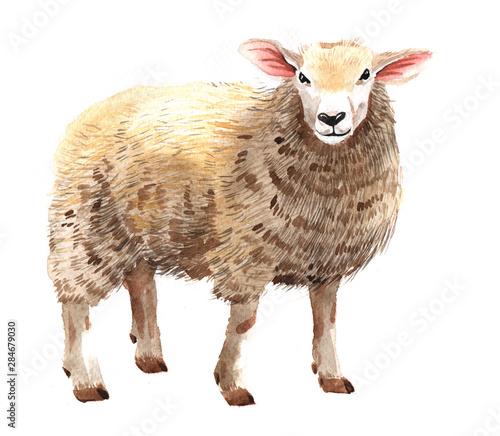 Valokuva Watercolor single sheep animal isolated on a white background illustration