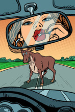 Woman Driver Looks In The Mirror. Wild Animals On The Road