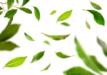 Vividly flying in the air green tea leaves isolated on white background 3d illustration.
