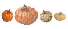 Vector Set Of Isolated Pattern With Wonderful Colorful Different Sort Of Pumpkins Set On Lines, Hand-drawn, Graphic, Real-style. Seasonal Colors: Orange, Beige, Brown, Green. Looks Watercolor, Fresh