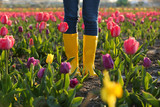 Fototapeta Tulipany - Woman in rubber boots walking across field with beautiful tulips after rain, closeup