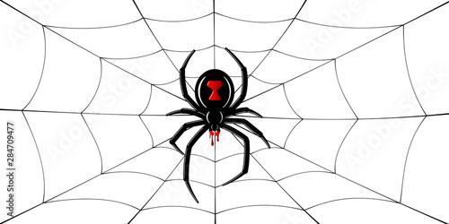 Photo  Spider Black Widow, cobweb