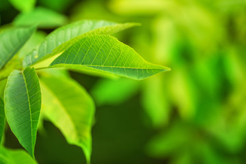 Close-up green leaf on branch. Natural environment concept