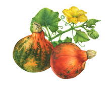 Autumn Bouquet Of Leaves, Flower And Pumpkins. Happy Thanksgiving. Watercolor Hand Drawn Painting Illustration, Isolated On White Background.