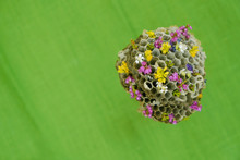 Empty Honeycombs Of Wild Wasps Are Decorated With Small Flowers On A Green Surface. Green House Concept. Family Concept. Unexpected Concept. Space Colonization Concept. Copy Space.  Close Up.