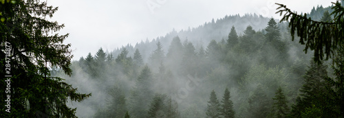 Photo  Coniferous forest in morning fog (mist), breathing mountains
