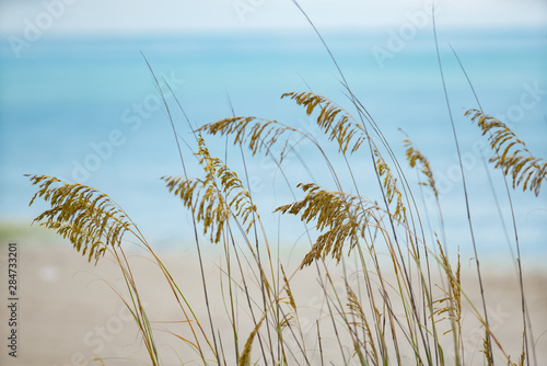 fototapeta na szkło Photo of beachgrass Myrtle Beach South Carolina USA