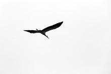 Close-up Of A Stork Bird Nest ...