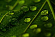 Drops Of Transparent Rain Wate...