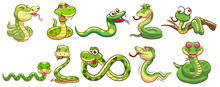Snake Vector Set Graphic Clipart Design