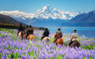 Panel Szklany Zwierzęta Travelers ride horses in lupine flower field, overlooking the beautiful landscape of Mt Cook National Park in New Zealand. Lupins hit full bloom in December to January which is summer of New Zealand.