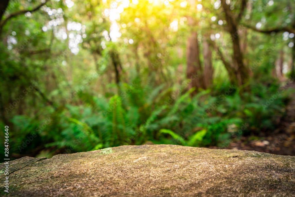 Fototapeta Empty rock table for product display in jungle of Tasmania, Australia. Nature product advertisement concept.
