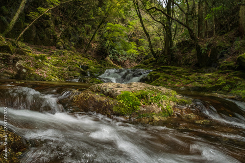 Fototapeten Forest river Refreshing Mie Prefecture, Japan