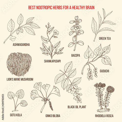 Best nootropic medicinal herbs for a healthy brain Wallpaper Mural
