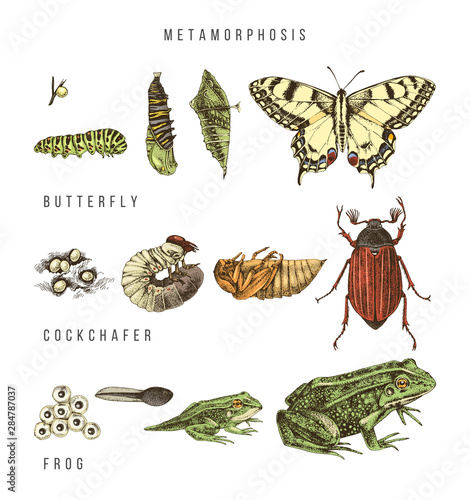 Fotografie, Tablou  Metamorphosis of the swallowtail, cockchafer and frog