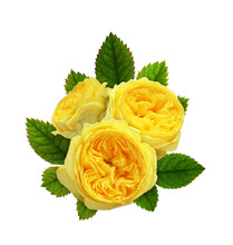 Yellow Rose Flowers In A Floral Composition