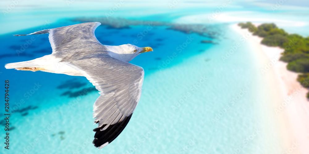 Fototapety, obrazy: Seagull flying above seacoast