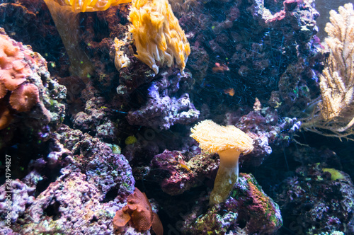 Rafa koralowa   Coral reef