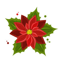 Poinsettia Flowers Isolated Ic...