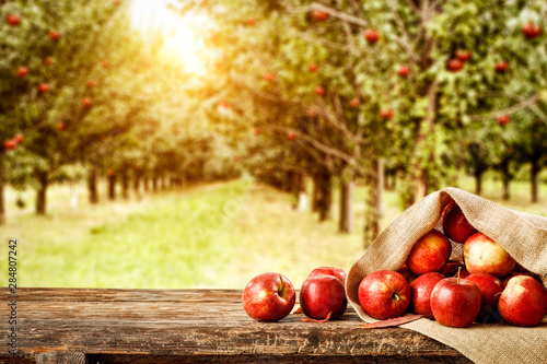 Fototapeta Fresh red apples on wooden board and blurred background of trees. Autumn time  obraz