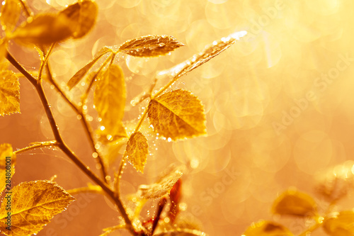 Cadres-photo bureau Miel Autumn leaves with water drops and spider web at sunset over blurred background.