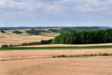 Poranne Letnie Słońce Oświetla  Pola Dojrzewających Zbóż  W Krajobrazie Wiejskim