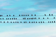 Birds Are Sitting On Wires Aga...