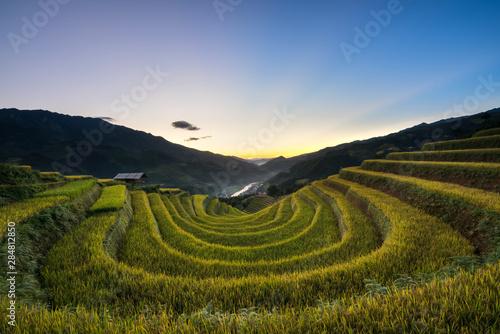 Fotobehang Rijstvelden Terraced rice field in harvest season at sunset in Mu Cang Chai, Vietnam.