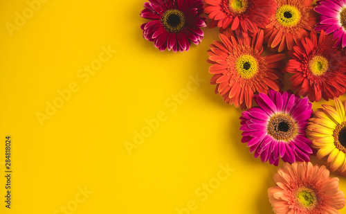 Bright beautiful gerbera flowers on sunny yellow background. Concept of warm summer and early autumn. Place for text, lettering or product. View from above, Copy space. Flatlay.