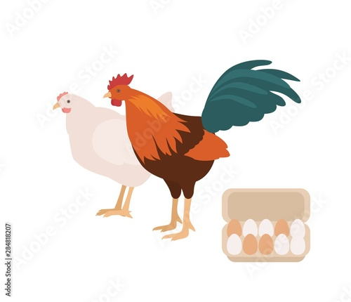 Cute cock, chicken and carton or box full of eggs Canvas Print