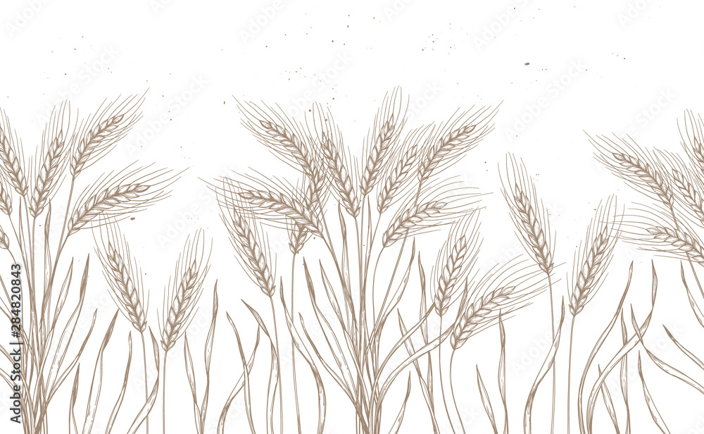 Fototapety, obrazy: Seamless pattern. Hand drawn vector illustration - Wheat. Rustic background (branches and stalks of cereals). Design elements in engraving style. Perfect for advertising, prints, packing