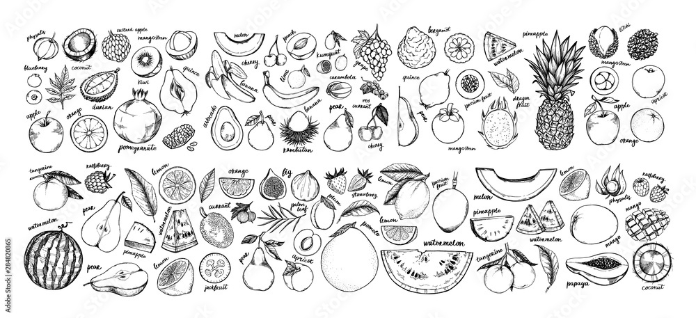 Fototapety, obrazy: Hand drawn vector illustration - Collection of tropical and exotic Fruits. Healthy food elements. Apple, orange, papaya, coconut, mango, pear etc. Perfect for menu, packing, advertising, cooking book.
