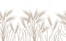 Seamless Pattern. Hand Drawn Vector Illustration - Wheat. Rustic Background (branches And Stalks Of Cereals). Design Elements In Engraving Style. Perfect For Advertising, Prints, Packing