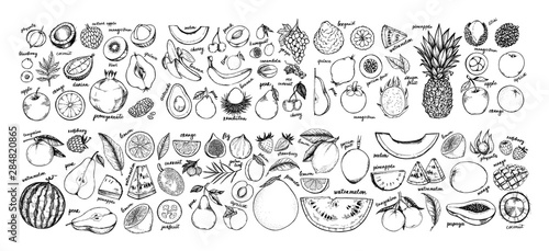 Obraz Hand drawn vector illustration - Collection of tropical and exotic Fruits. Healthy food elements. Apple, orange, papaya, coconut, mango, pear etc. Perfect for menu, packing, advertising, cooking book. - fototapety do salonu