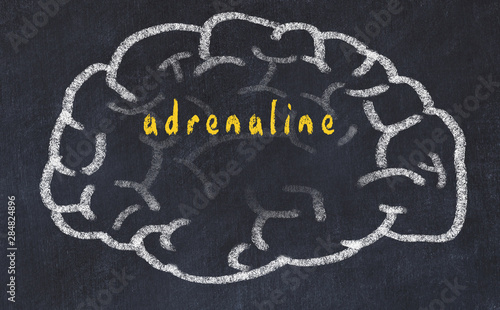 Photo Drawind of human brain on chalkboard with inscription adrenaline